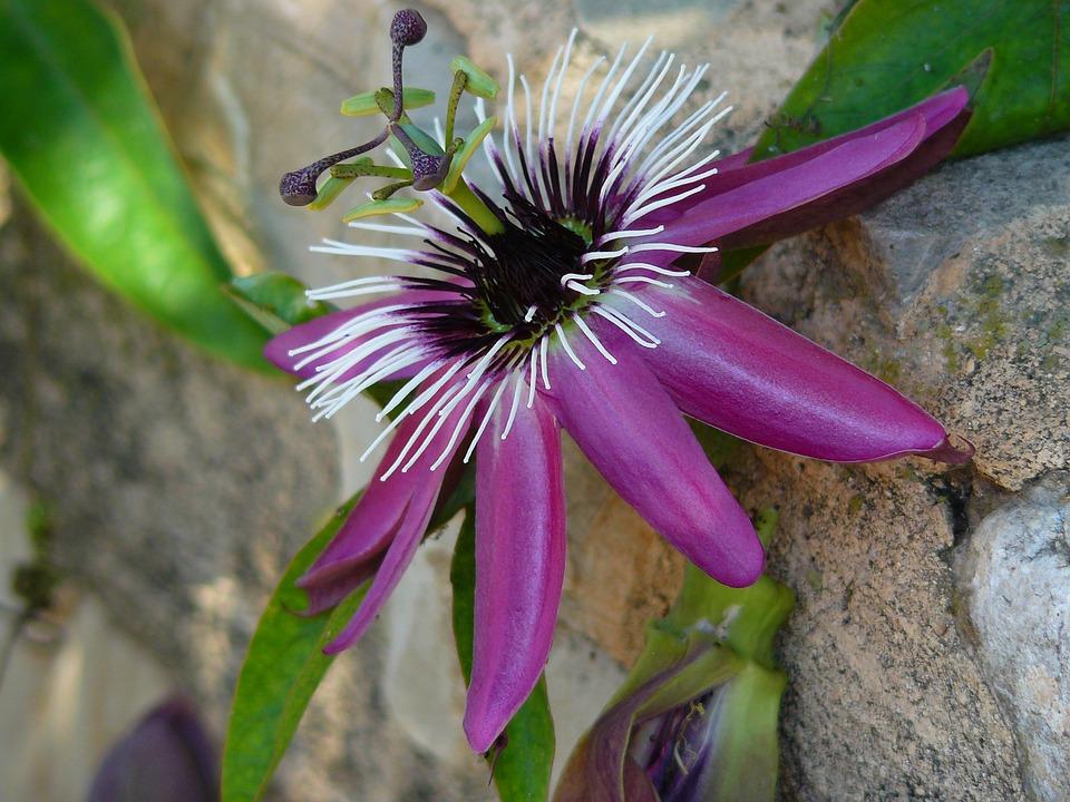 květ na zdi